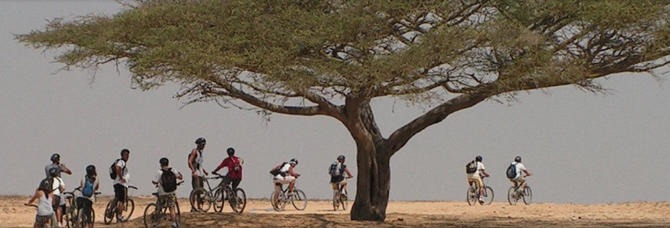 טיולי אופניים מודרכים